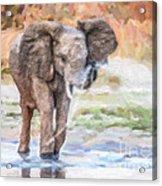Baby Elephant Spraying Water Acrylic Print