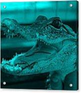 Baby Gator Turquoise Acrylic Print