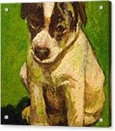 Baby Jack Russel Acrylic Print