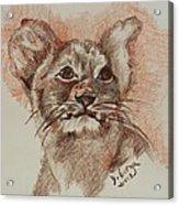 Baby Lion Acrylic Print