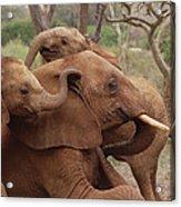 Baby Orphans Explore Imenti Tsavo Kenya Acrylic Print