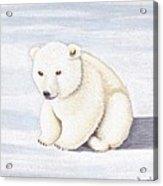 Baby Polar Bear Acrylic Print