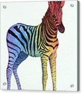 Baby Rainbow Zebra Acrylic Print