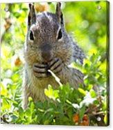 Baby Rock Squirrel  Acrylic Print