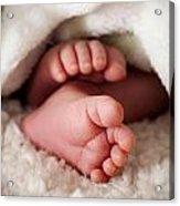 Baby Toes Acrylic Print