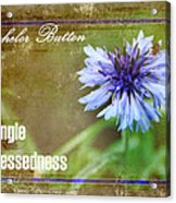 Bachelor Button Acrylic Print