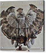 Back Kachina Eagle Acrylic Print