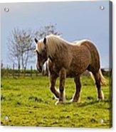 Back Light Horse Acrylic Print
