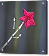 Back Of Flower Acrylic Print