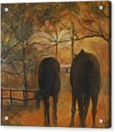 Back To The Stable Acrylic Print