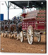 Back View Anheuser Busch Clydesdales Pulling A Beer Wagon Usa Acrylic Print
