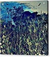 Back Yard Sky Acrylic Print