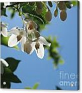 Backlit Blossom Acrylic Print