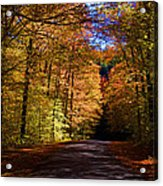 Backlit Canopy Acrylic Print