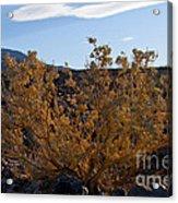 Backlit Desert Foliage Acrylic Print