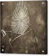 Backlit Spider Web In Sepia Tones Acrylic Print