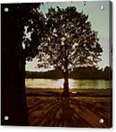 Backlit Tree Acrylic Print