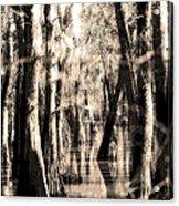 Backwater Cajun Country Acrylic Print