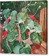 Backyard Begonia Acrylic Print