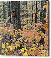 Backyard Birdhouse Acrylic Print