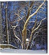 Backyard Trees Acrylic Print