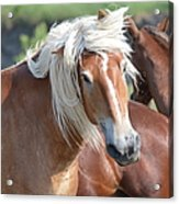 Bad Hair Day 8024 Acrylic Print