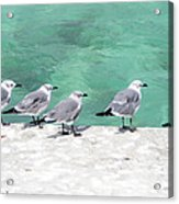 Bahama Birds Acrylic Print