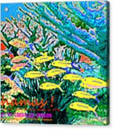 Bahamas Coral Reef Acrylic Print