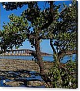 Bahia Honda Rail Bridge And Tree Acrylic Print