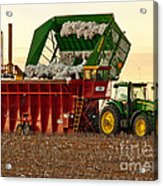 Bailing Cotton Acrylic Print