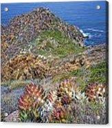 Baja California Coast Acrylic Print