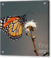 Balancing Act Acrylic Print by James Brunker