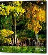 Bald Cypress 2 - Digital Effect Acrylic Print