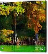 Bald Cypress 3 - Digital Effect Acrylic Print