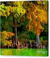 Bald Cypress 4 - Digital Effect Acrylic Print