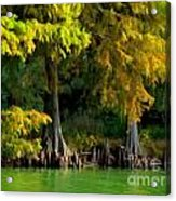 Bald Cypress Trees 1 - Digital Effect Acrylic Print