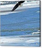 Bald Eagle 2832 Acrylic Print