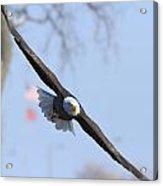 Bald Eagle And Flag Acrylic Print