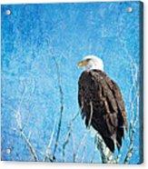 Bald Eagle Blues Acrylic Print
