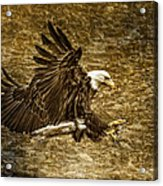Bald Eagle Capture Acrylic Print