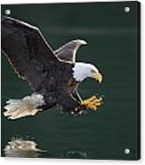 Bald Eagle Catching Fish Acrylic Print by John Hyde