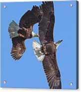 Bald Eagle Chase Over Pohick Bay Drb148 Acrylic Print