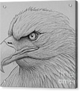 Bald Eagle Drawing Acrylic Print