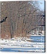 Bald Eagle Fledgling Near Ludwig Mill 2576 Acrylic Print