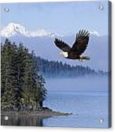 Bald Eagle In Flight Over The Inside Acrylic Print