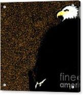 Bald Eagle In Repose Acrylic Print
