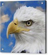 Bald Eagle In The Clouds Acrylic Print