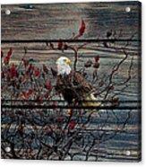 Bald Eagle On Barnwood Acrylic Print