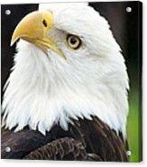 Bald Eagle - Power And Poise 01 Acrylic Print
