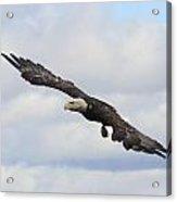 Bald Eagle Release 1 Acrylic Print